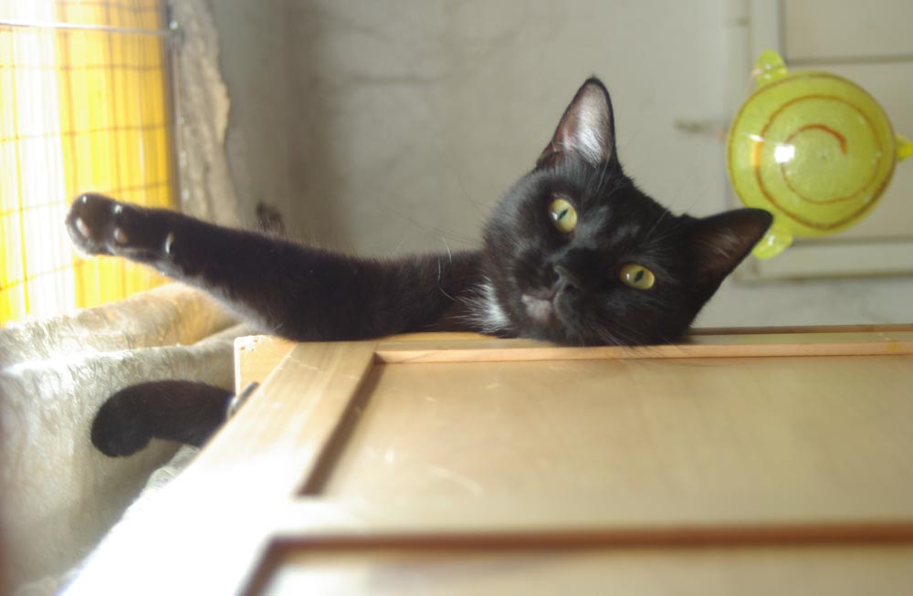 black cat on wardrobe