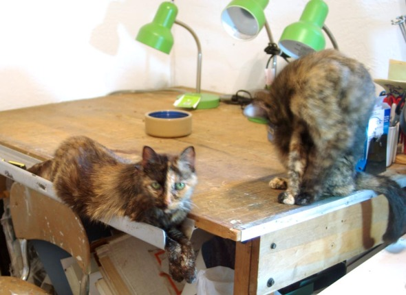 tortie cats in studio