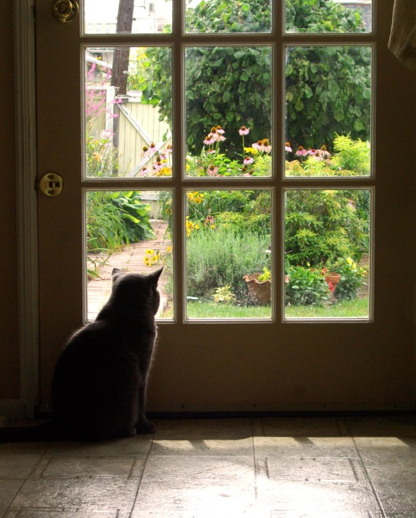 gray cat looks at garden
