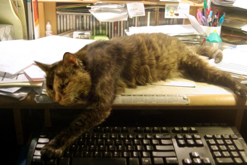 tortie cat with paw on keyboard