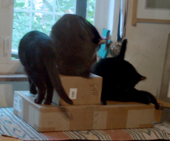 three cats on a box