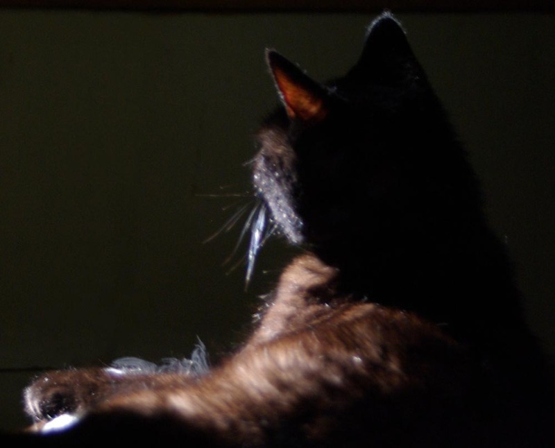 black cat in dark room