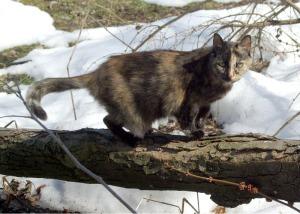 tortie cat on branch