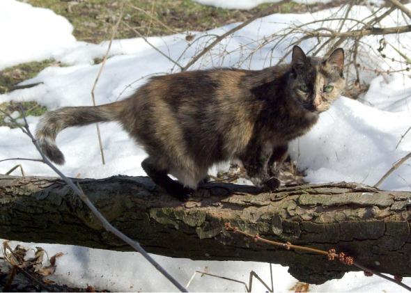 tortie cat on branch