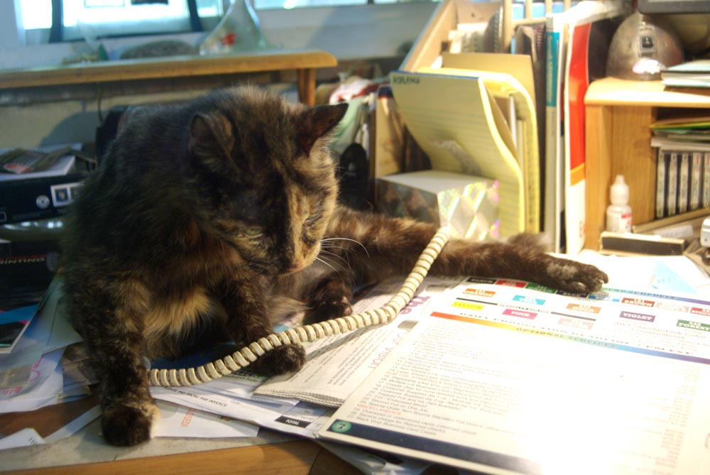 tortie cat on the phone