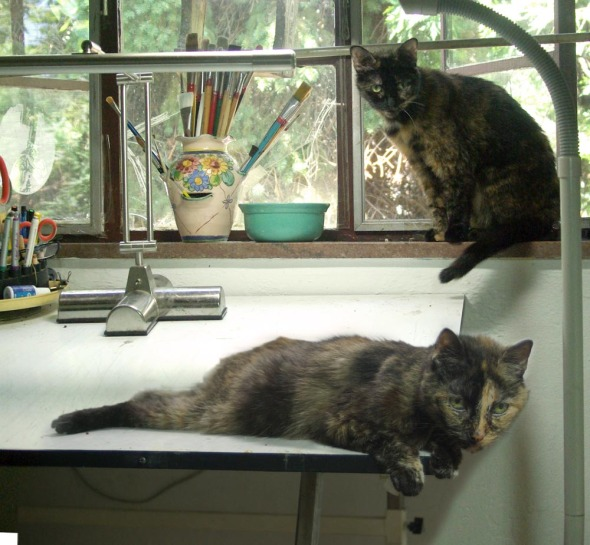 two torties in studio