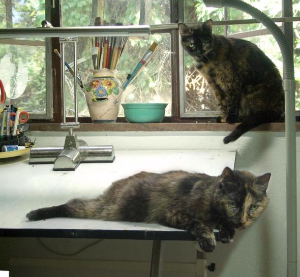 two torties in studio
