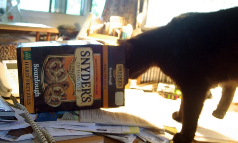 photo of black cat with pretzel box