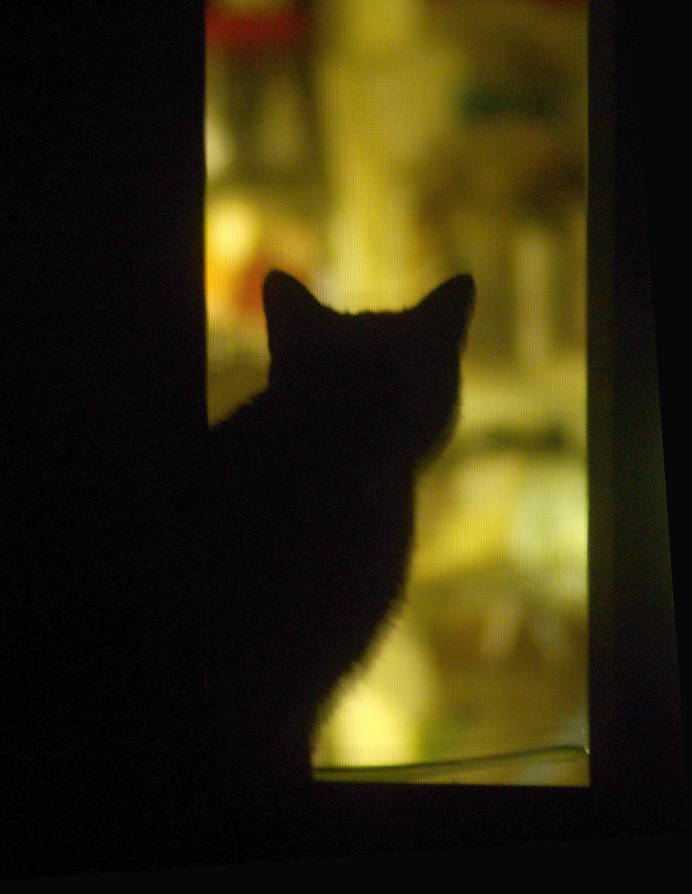 cat silhouette in window