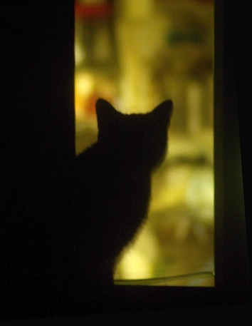 cat silhouette in window