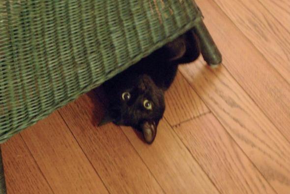 black kitten under chair
