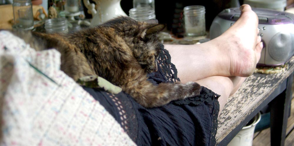 tortie cat on lap with crochet