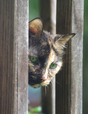 tortie cat looking through railing