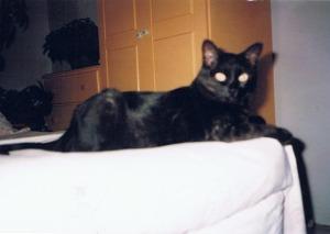 black cat on bed