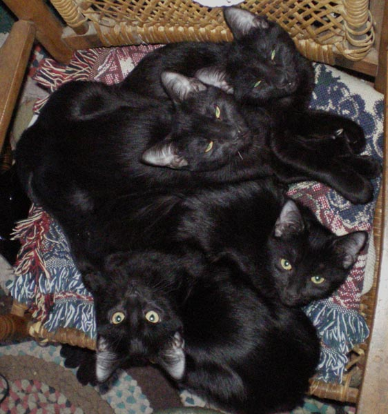 four black cats on the rocker
