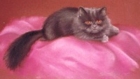 portrait of gray persian cat