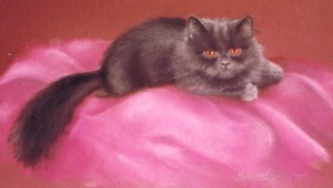 portrait of gray persian cat
