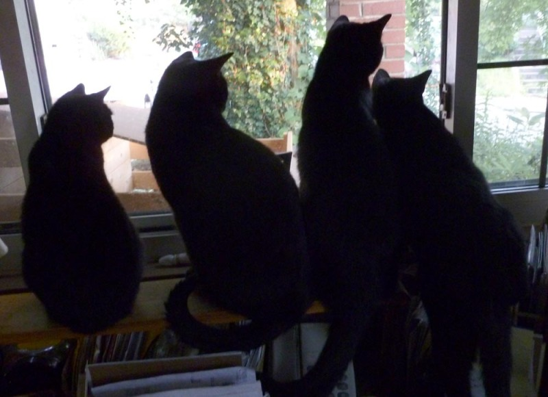 four black cats at window