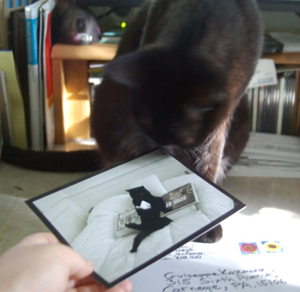 cat with card