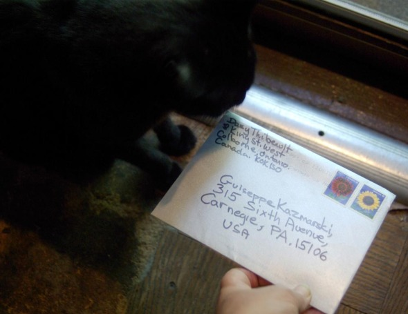 cat with envelope