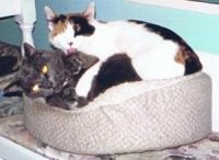 two cats in bed