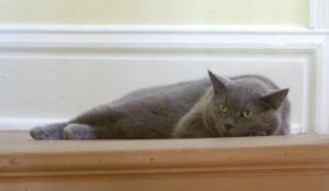 gray cat on landing