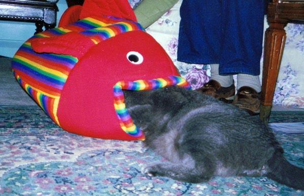 cat in fish cat bed