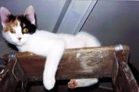 calico kitten on ladder