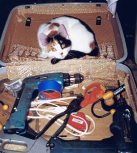 kitten in toolbox