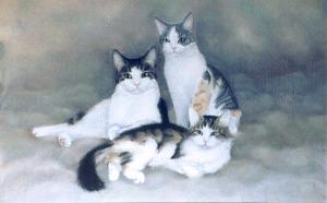 portrait of three cats