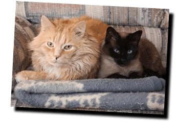 karen's cats