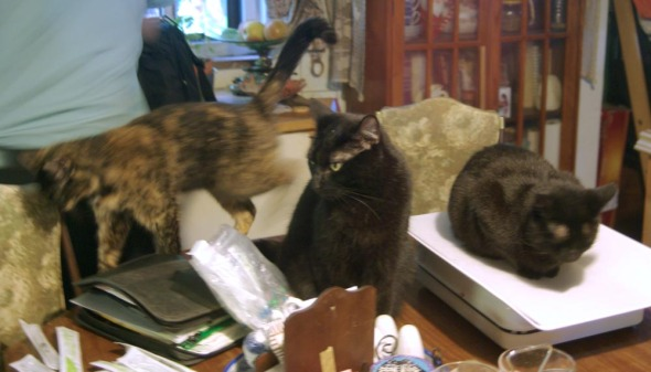 cats on table