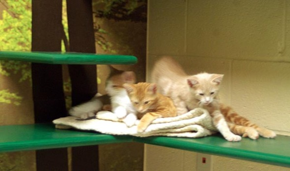 orange kittens on shelf