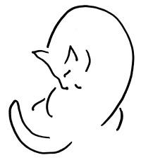 line art cat sketch