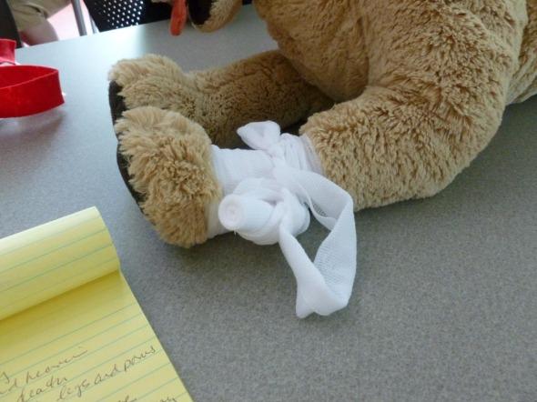 bandage on dog model