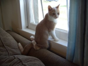 cat with deformed legs