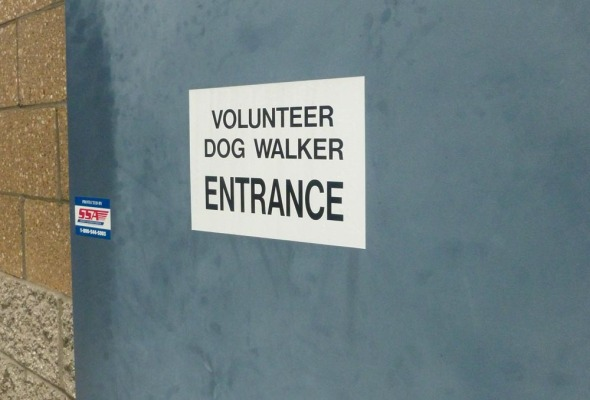dog-walking door
