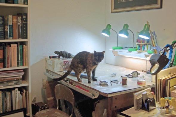 tortoiseshell cat on table