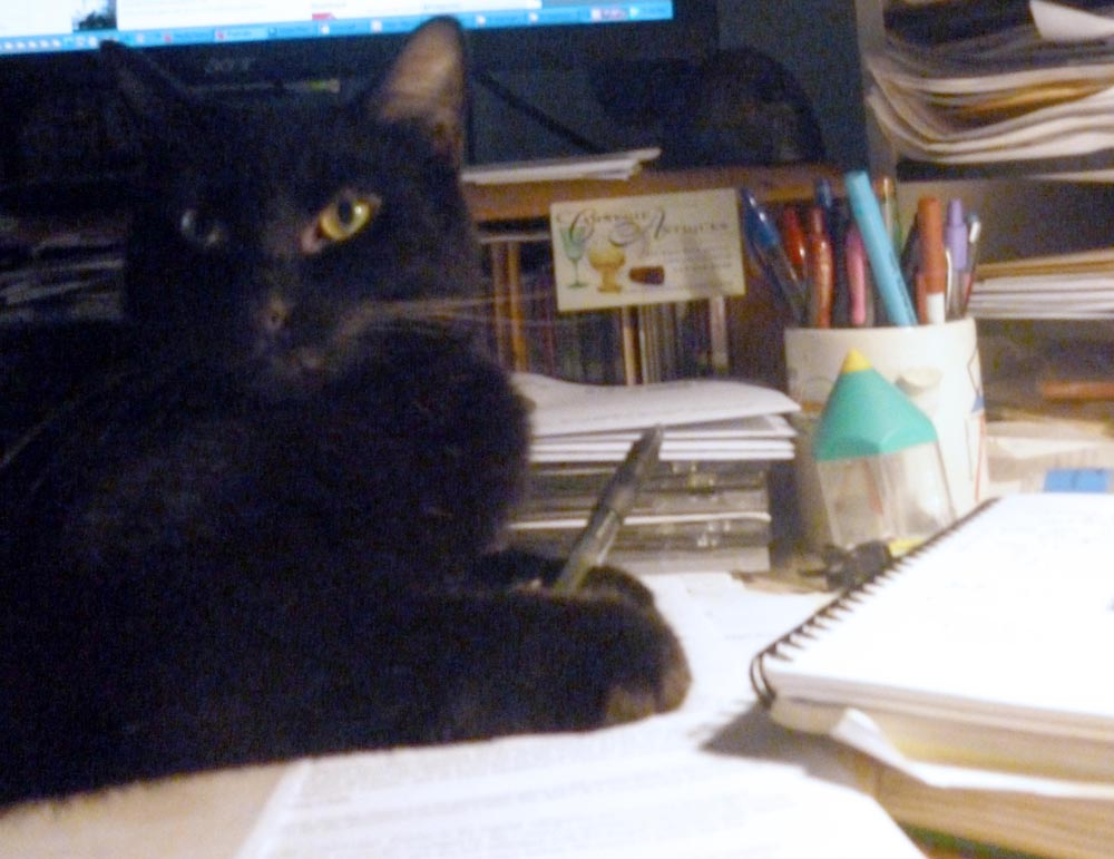 black cat with pen on desk