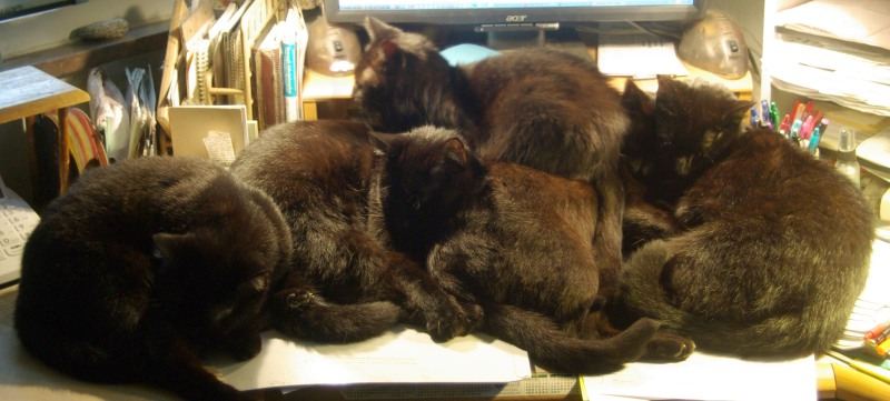 five black cats in a pile