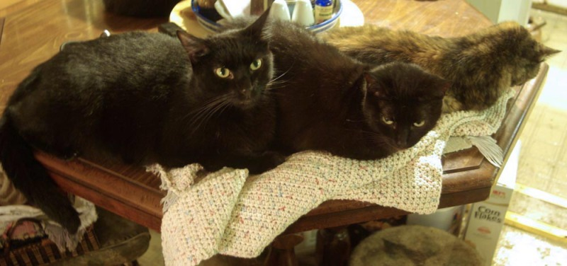 three cats on crocheted item