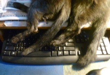black cat paws and tails on keyboard