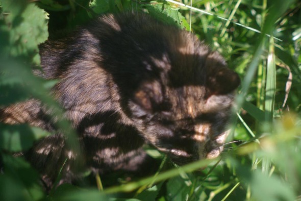 tortoiseshell cat in greens