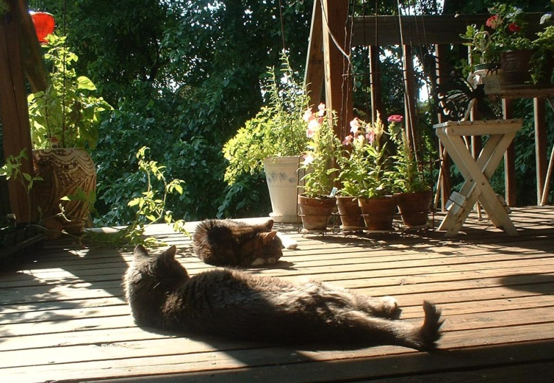 two cats on the deck in the sun