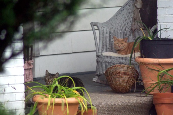two cats on porch