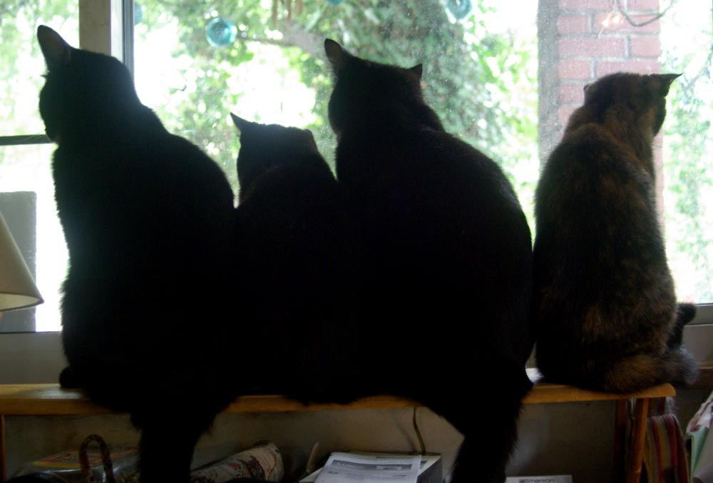 four cats at window