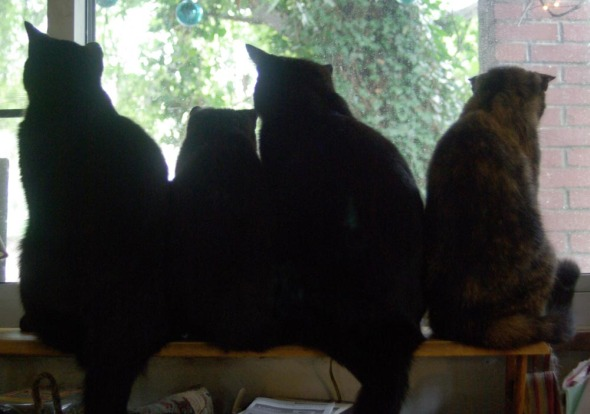 four cats looking out window
