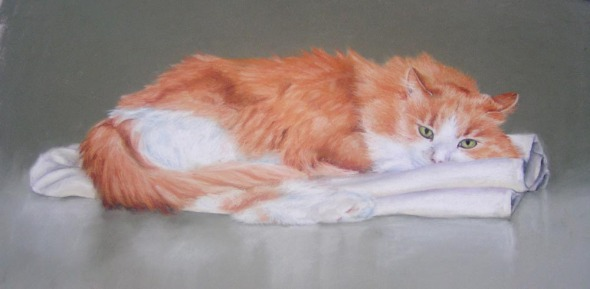 portrait of orange and white cat on towel