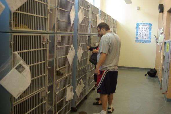 cat adoption room at wphs