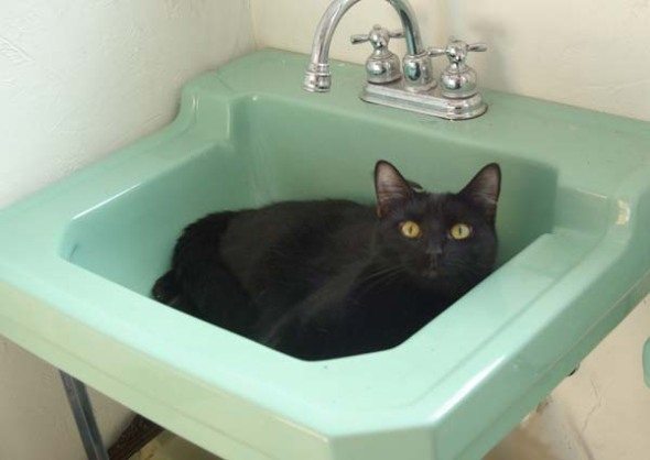 black cat in green sink